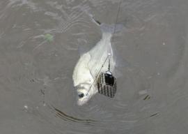 Фидер в холодной воде