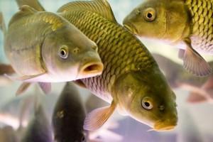 Ловля рыбы весной — особенности