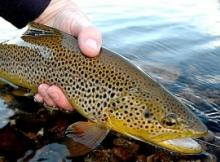 Ловля голавля и форели спиннингом на мелководных реках