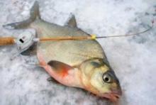 Особенности ловли леща зимой