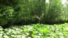 Ловля нахлыстом на ручьях