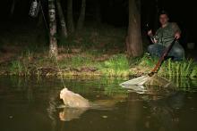 Ловля карпа на поплавок