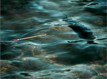 Ловля хищника на поплавок