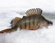 Рыбалка на Урале зимой