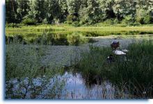 Рыбалка на озере Карась линь красноперка